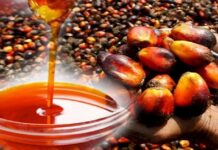 Palm Oil Producing States In Nigeria