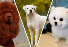 The 10 Most Expensive Dog Breeds In The World